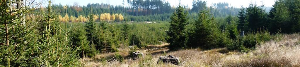 Plánské lesy, s.r.o.